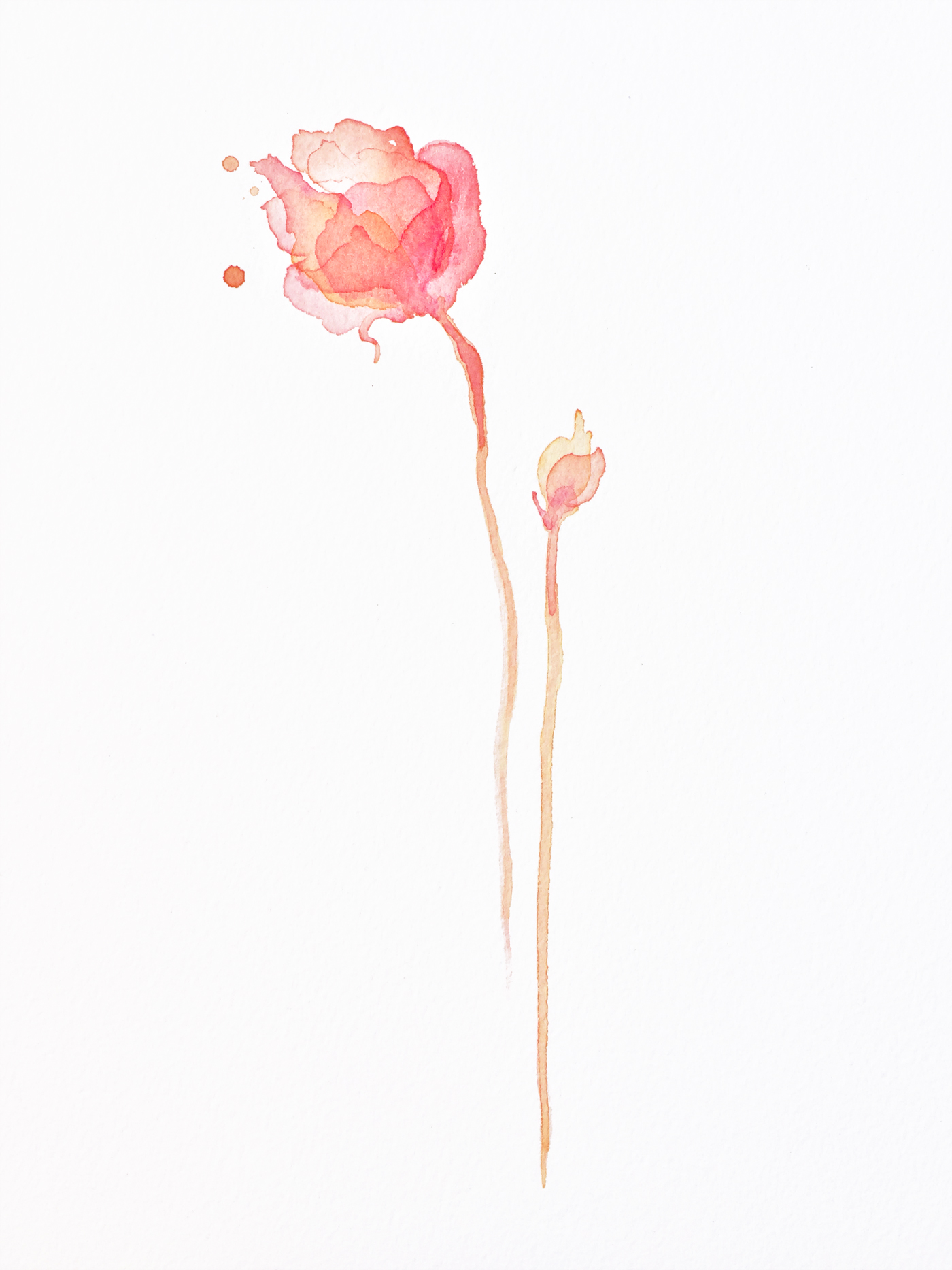 hovering_roses_1200x1600